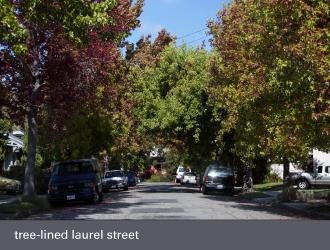 dimond laurel district oakland - laurel avenue trees street