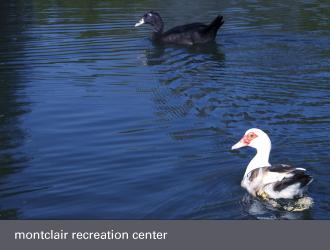 montclair oakland - ducks