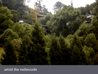 montclair oakland homes - redwood trees