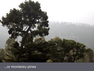 montclair oakland homes - monterey pine