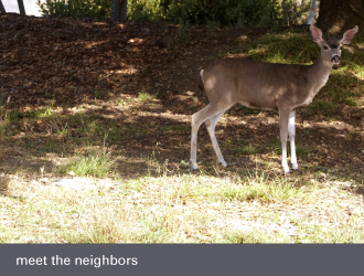 montclair oakland homes - deer